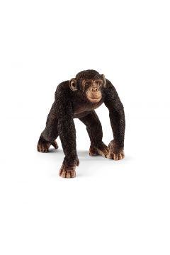 Szympans Samiec