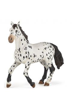 Koń Appaloosa