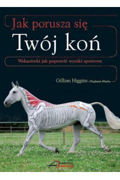 Jak porusza się Twój koń