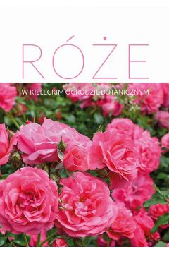 Róże w Kieleckim Ogrodzie Botanicznym