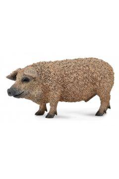 Świnia węgierska Mangalica