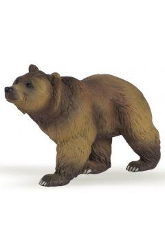Niedźwiedź pirenejski