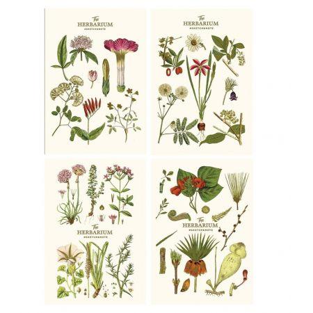 Notes A5/64K gładki Sketch&note Herbarium ASTRA