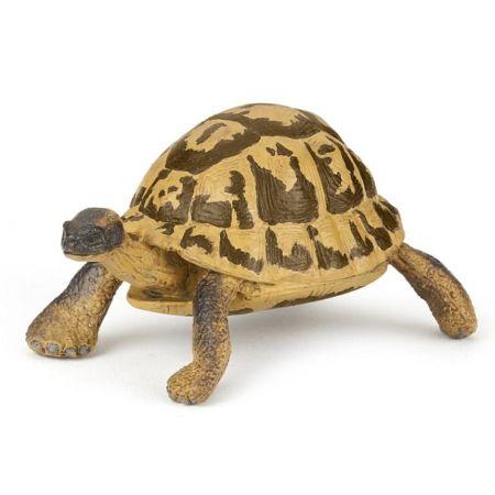 Żółw Hermana