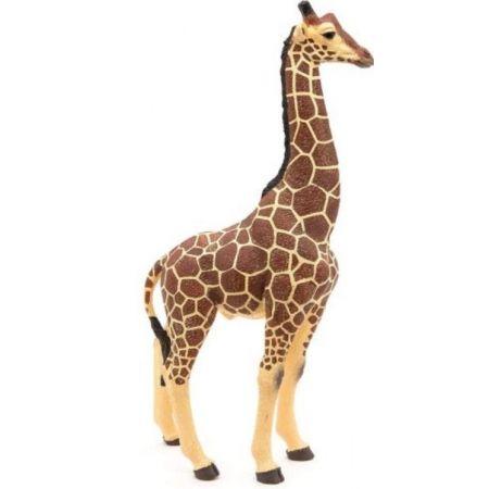 Żyrafa samiec