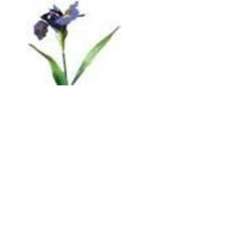 Kompozycja kwiatowa irys VC0968