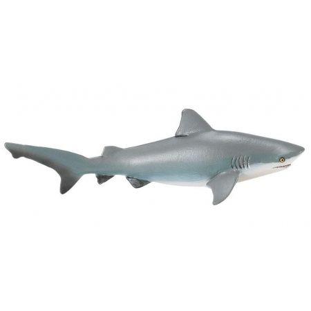 Żarłacz tępogłowy